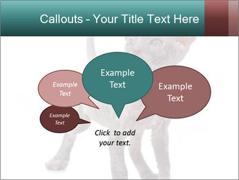 Cat PowerPoint Template - Slide 73