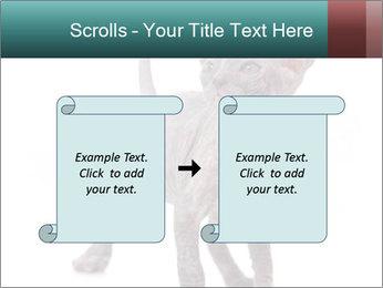 Cat PowerPoint Template - Slide 74