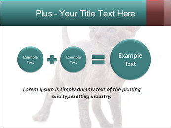 Cat PowerPoint Template - Slide 75