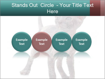 Cat PowerPoint Template - Slide 76