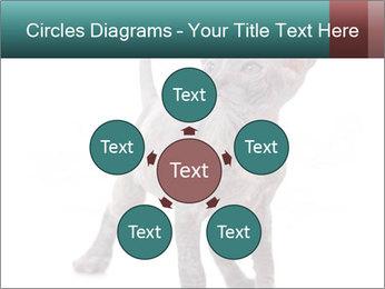 Cat PowerPoint Template - Slide 78