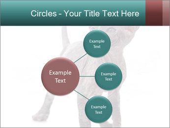 Cat PowerPoint Template - Slide 79