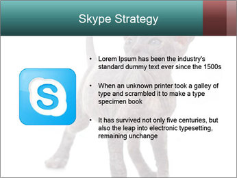 Cat PowerPoint Template - Slide 8