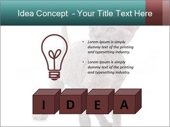 Cat PowerPoint Template - Slide 80