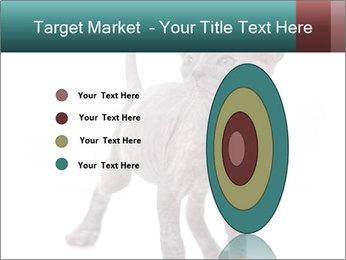 Cat PowerPoint Template - Slide 84