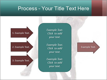 Cat PowerPoint Template - Slide 85