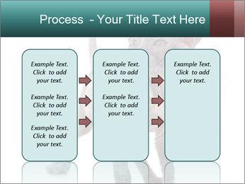 Cat PowerPoint Template - Slide 86
