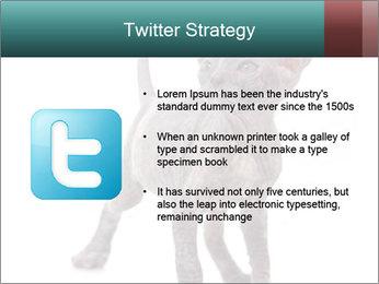 Cat PowerPoint Template - Slide 9