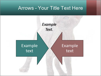 Cat PowerPoint Template - Slide 90