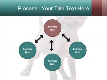 Cat PowerPoint Template - Slide 91