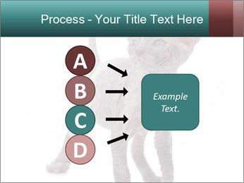 Cat PowerPoint Template - Slide 94