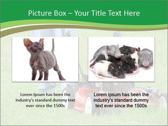 Lawn PowerPoint Template - Slide 18