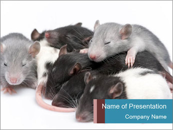 Mice PowerPoint Template - Slide 1