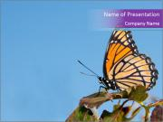 Butterfly PowerPoint Templates