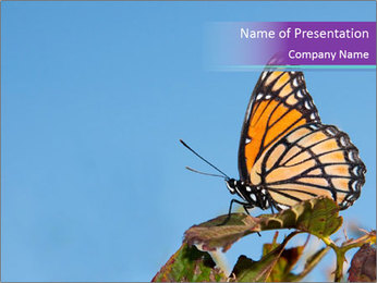Butterfly PowerPoint Templates - Slide 1