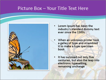 Butterfly PowerPoint Templates - Slide 13