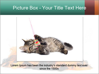 Black cat PowerPoint Template - Slide 15
