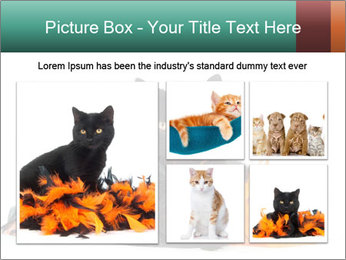 Black cat PowerPoint Template - Slide 19