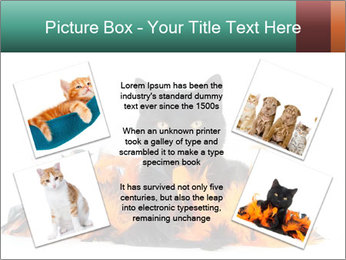 Black cat PowerPoint Template - Slide 24