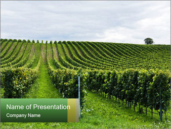 Beautiful rows PowerPoint Template