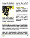 0000091780 Word Templates - Page 4