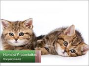 British kittens PowerPoint Template