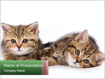British kittens PowerPoint Templates - Slide 1