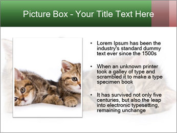 British kittens PowerPoint Templates - Slide 13