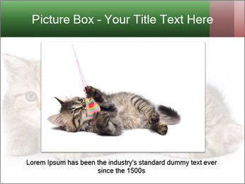 British kittens PowerPoint Templates - Slide 16