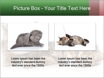 British kittens PowerPoint Templates - Slide 18