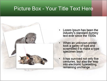 British kittens PowerPoint Templates - Slide 20