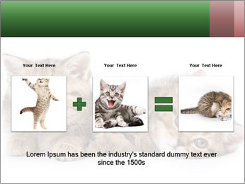 British kittens PowerPoint Templates - Slide 22