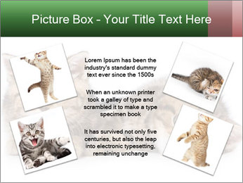 British kittens PowerPoint Templates - Slide 24