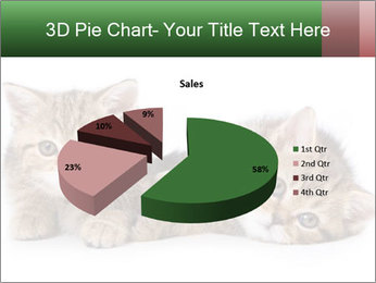 British kittens PowerPoint Templates - Slide 35