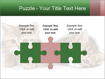 British kittens PowerPoint Templates - Slide 42