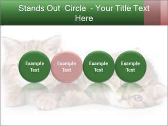 British kittens PowerPoint Templates - Slide 76
