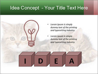 British kittens PowerPoint Templates - Slide 80