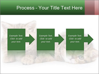 British kittens PowerPoint Templates - Slide 88