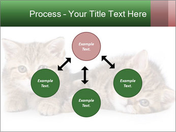 British kittens PowerPoint Templates - Slide 91