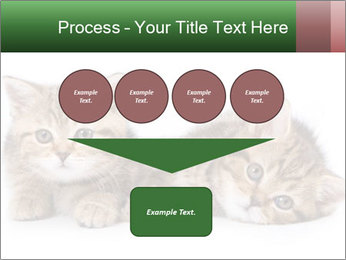 British kittens PowerPoint Templates - Slide 93