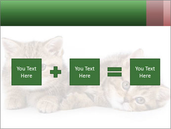 British kittens PowerPoint Templates - Slide 95