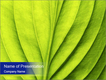 Leaf close-up PowerPoint Template - Slide 1