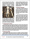 0000091832 Word Templates - Page 4