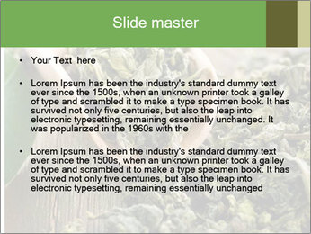 Green Tea PowerPoint Template - Slide 2