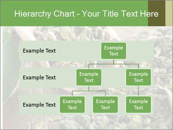 Green Tea PowerPoint Template - Slide 67