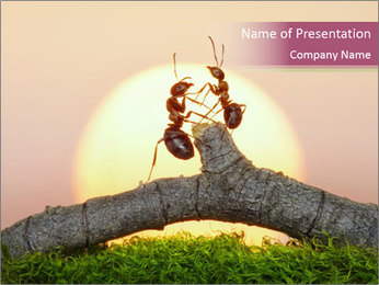 Two ants on sunset PowerPoint Template