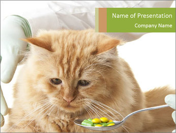 Cat PowerPoint Templates - Slide 1