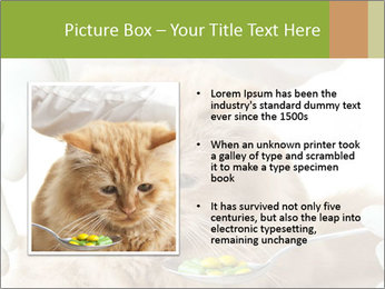Cat PowerPoint Templates - Slide 13