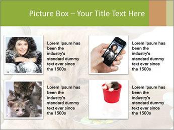Cat PowerPoint Template - Slide 14
