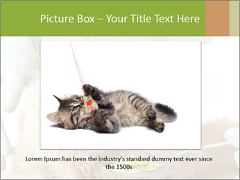 Cat PowerPoint Templates - Slide 15